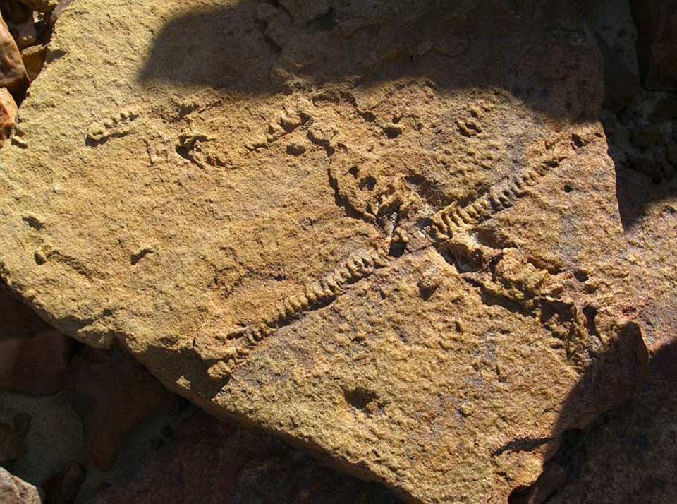Vertrocknete Ströme: Spuren von Süßwasser-Würmern erinnern an die einstige Artenfülle des eisigen Kontinents