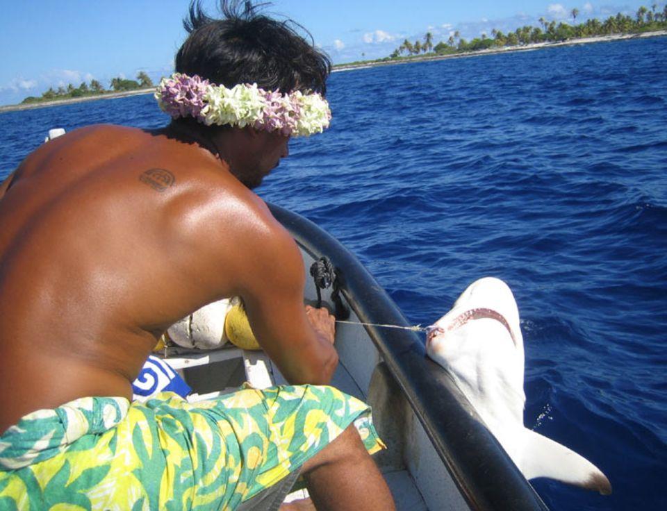 Gaspard, ein Einheimischer des Rangiroa Atolls, hat versehentlich einen Haifisch am Haken. Eigentlich hat er es auf kleinere Fische abgesehen