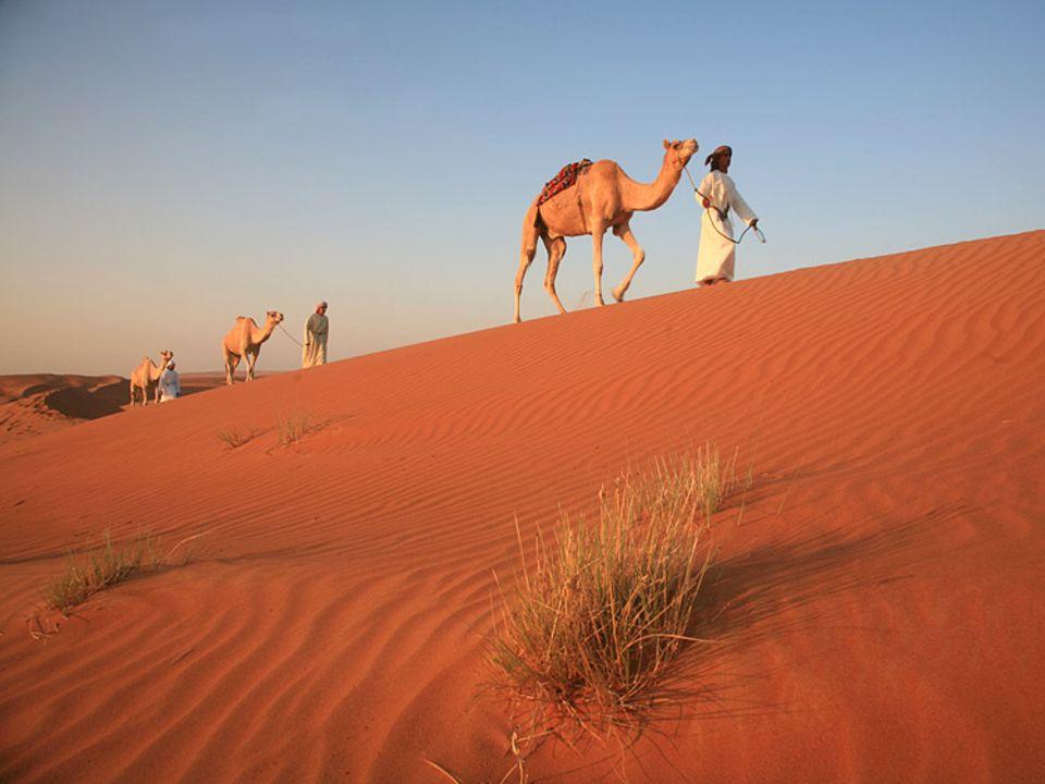 Schöne der Wüste: Al shams, die Sonne, taucht die Wahiba in rötliches Morgenlicht. Sie wärmt die Beduinen, die mit ihren Reittieren die Nacht in den Dünen verbracht haben