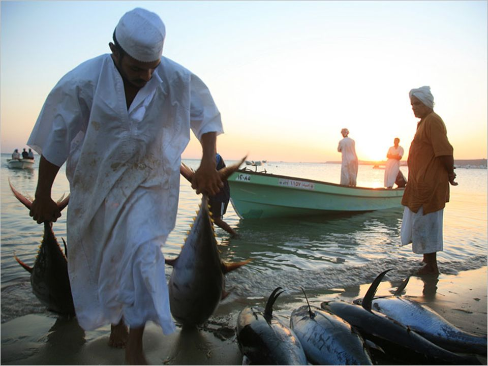 Guter Fang: Der Strand von Sur ist am Ende der Nacht von Tunfischen übersät. Nur osmanische Staatsbürger dürfen als Fischer arbeiten und am Fang verdienen