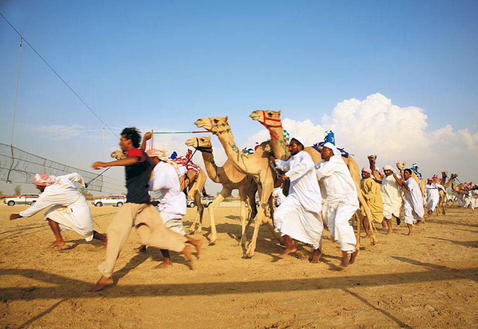 Die Kamelflüsterer: Männer, meist aus Pakistan oder Bangladesch, bringen die Tiere zum Startnetz - aber nicht dazu, auch schnell zu laufen