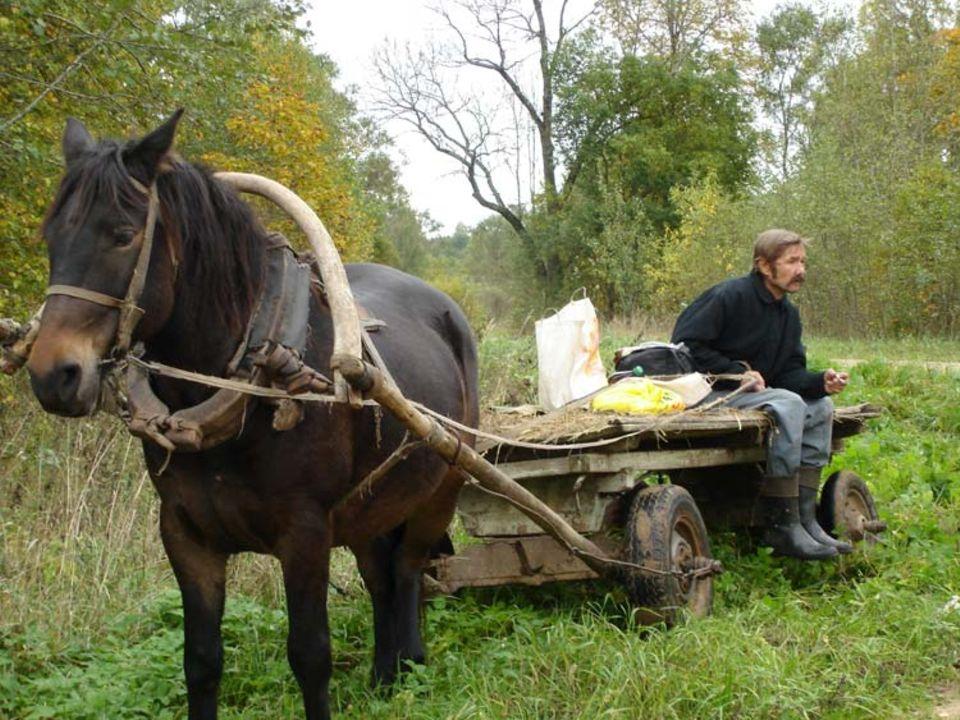 Ein Dorfladen reist durch Lettland