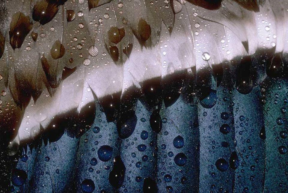 Auf Federn ist eine dünne Fettschicht, so perlt Wasser einfach ab