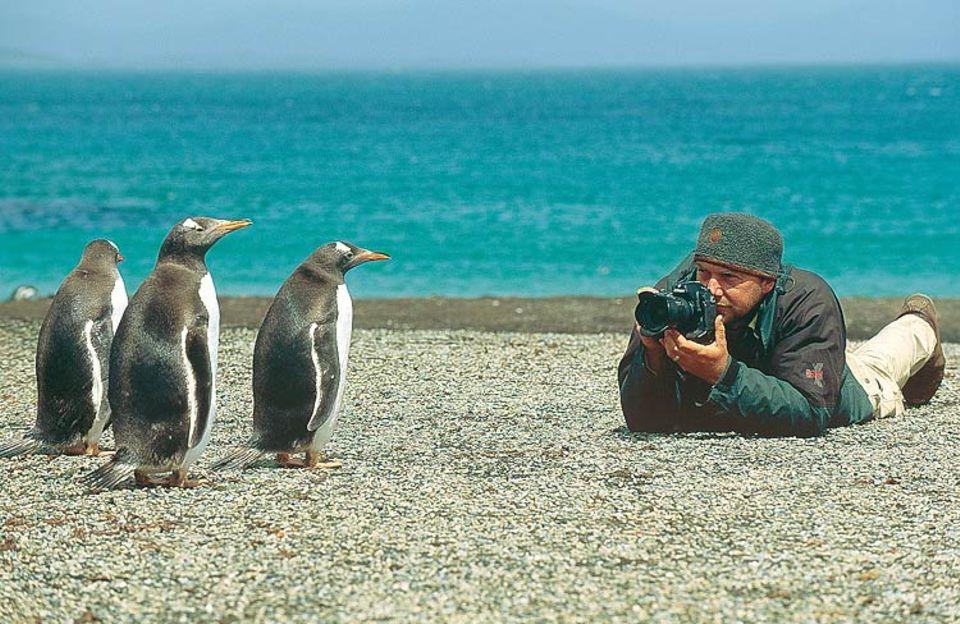 Pinguine sind ähnlich neugierig wie Menschen. Wenn der Fotograf auf Augenhöhe näher kam, beobachteten sie ihn besonders genau