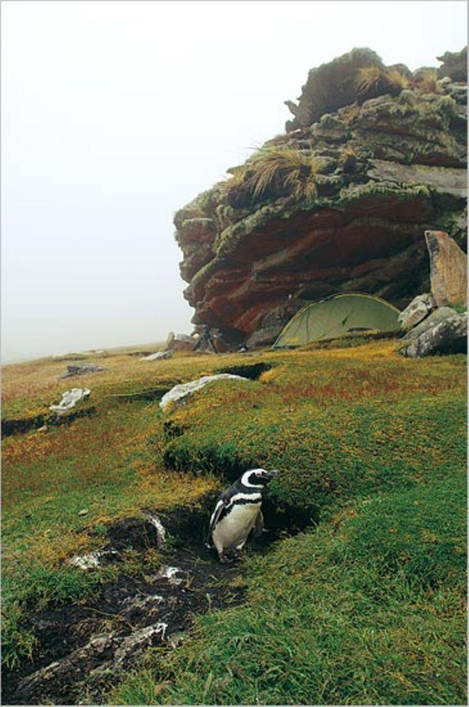 Unter einem Felsvorsprung richtete Zankl sein Zuhause ein. Für Wochen wohnte er neben einigen Magellan-Pinguinen, die dort ihre Nester hatten