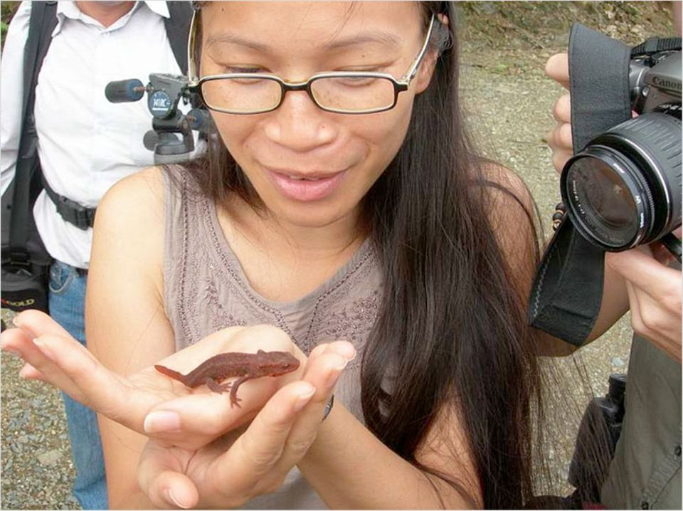 Der seltene Tam-Dao-Salamander kommt nur im gleichnamigen Nationalpark vor