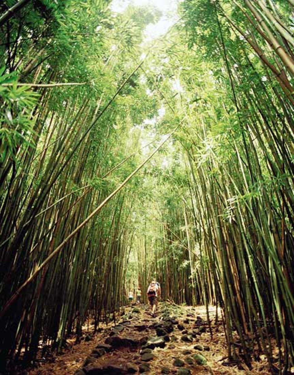 Im Kipahulu-Tal im Südosten Mauis wähnen sich die Wanderer in einem Zauberwald - der Bambus wächst meterhoch