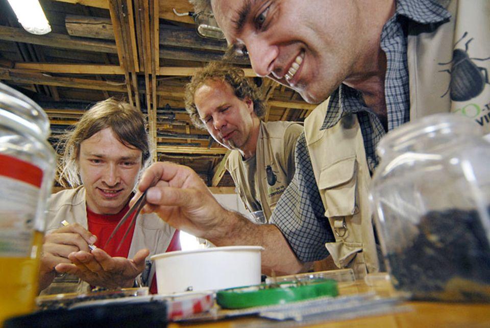 Steffen Floßmann, Andreas Weigel und Reiner Büttner (v. li.) sortieren die gesammelten Käfer und Hautflügler