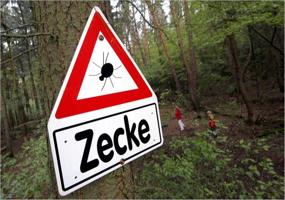 Vielerorts weisen Warnschilder auf die schleichende Gefahr im Wald hin - hier im Landkreis Offenbach