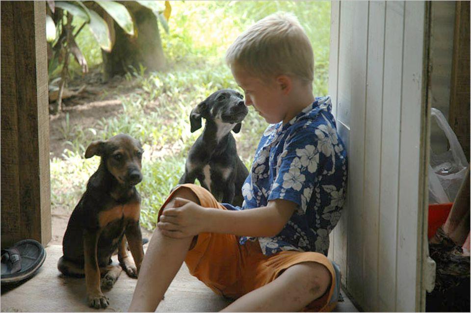 Finn mit seinen beiden Welpen Noa (schwarz) und Jolly (braun)