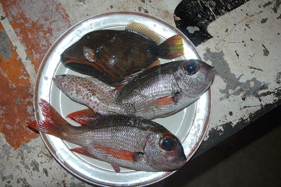Diese Fische hat alle Luisa gefangen