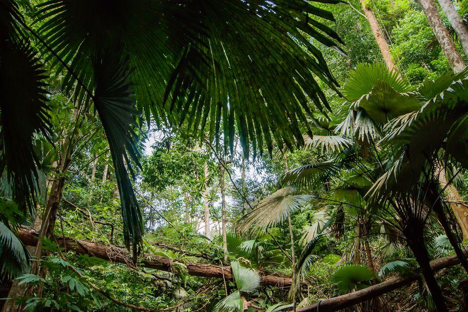 Tropischer Regenwald, Dschungel, Regenwald, Tropen