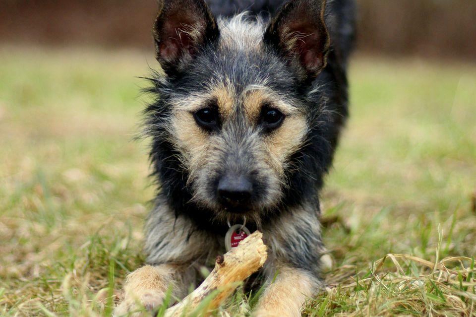 Hund, Redewendung, bunter Hund, Terrier, Terriermix