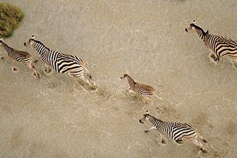 Afrika, Zebras, Herde, Savanne