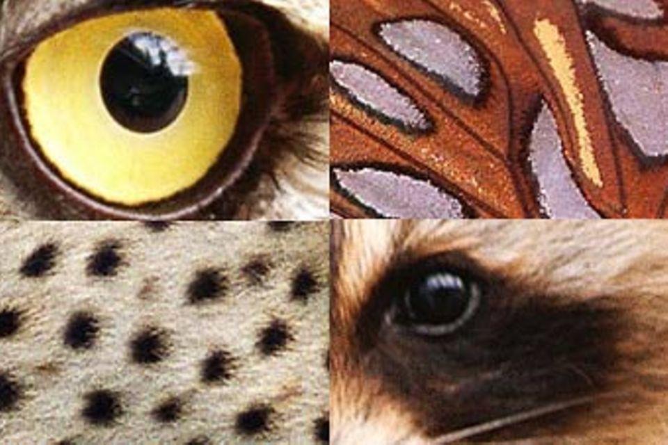 Bilderrätsel Tiere