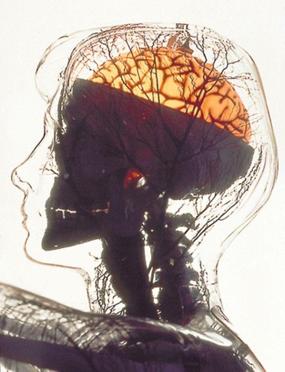 """Was erzählt der Bauch dem Kopf? Dass beide """"Hirne"""" miteinander kommunizieren, ist für die Bauchforscher unstrittig"""