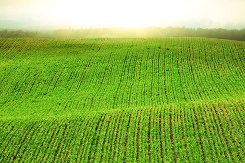 Redewendung: Alles im grünen Bereich