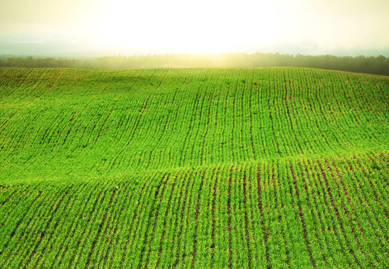 """Redewendung: Der """"grüne Bereich"""" ist nicht wortwörtlich zu verstehen..."""