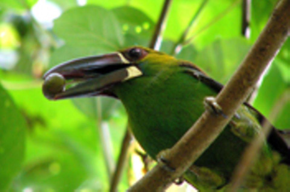 Ecuador: Walderhalt und Entwicklung in der Intag-Region, Imbabura