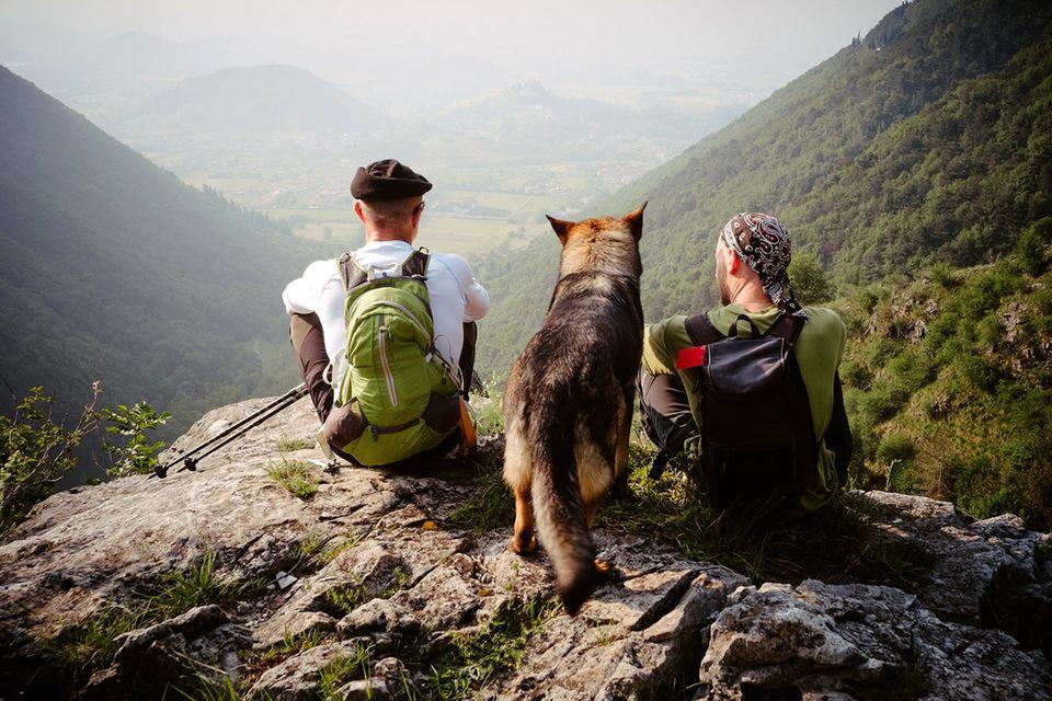 Outdoor: Camping mit Hund