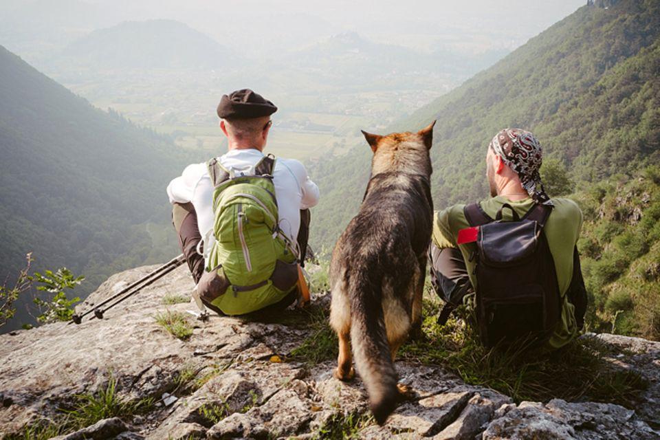 Haustiere: Zelten mit Hund