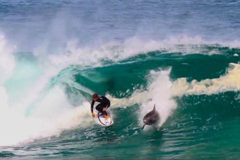 Australien: Delfin stiehlt Surfer die Welle - und die Show