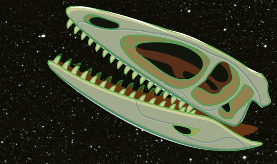 """Weltall: 1998 transportierte das Spaceshuttle """"Endeavour"""" einen Coelophysis-Schädel ins Universum"""