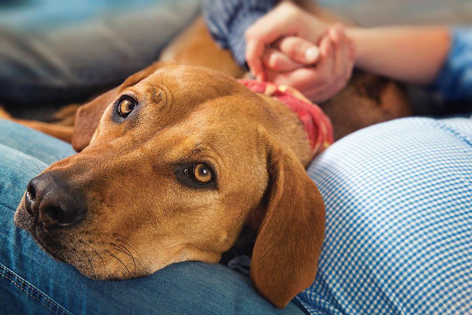 Hunde: Das weiß Ihr Hund über Ihre Stimmung