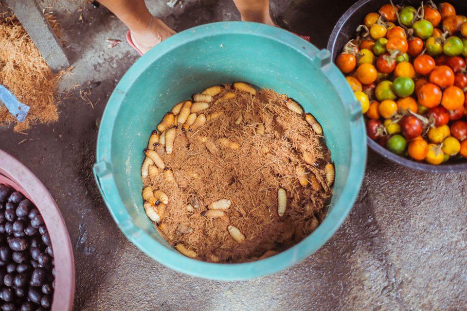 Salt & Silver: Ob Maden oder Zaubermittelchen jeglicher Art, auf dem Markt in Iquitos ist alles zu finden