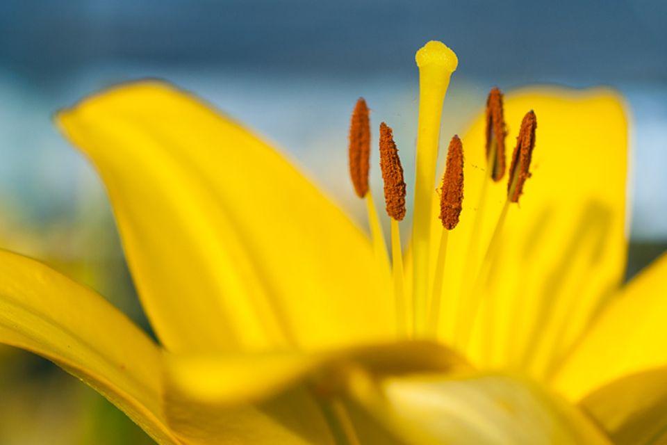 Gib mir fünf: Fünfmal staunen über Pollen