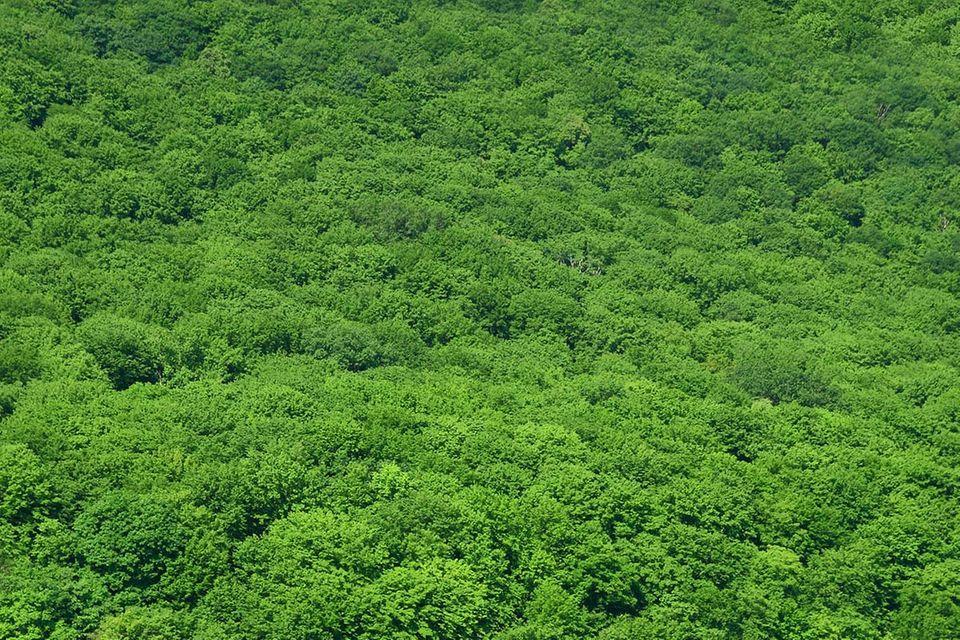 """Vorstoß zum Schutz des Regenwaldes: So will Norwegen """"abholzungsfrei"""" werden"""