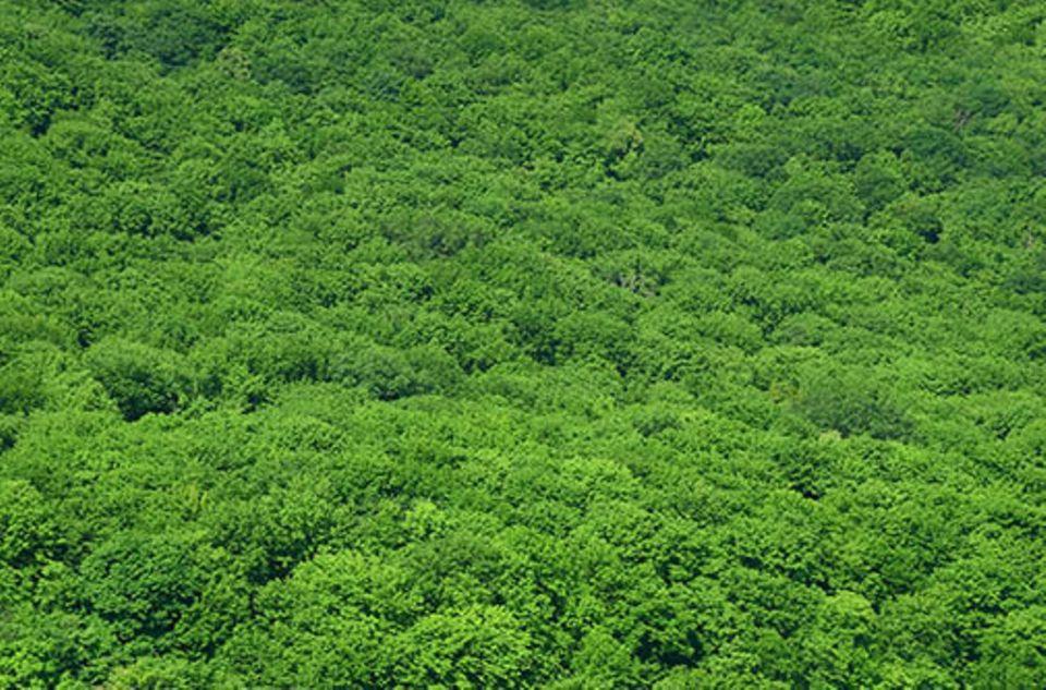 Vorstoß zum Schutz des Regenwaldes: So üppig wächst der Regenwald längst nicht mehr überall