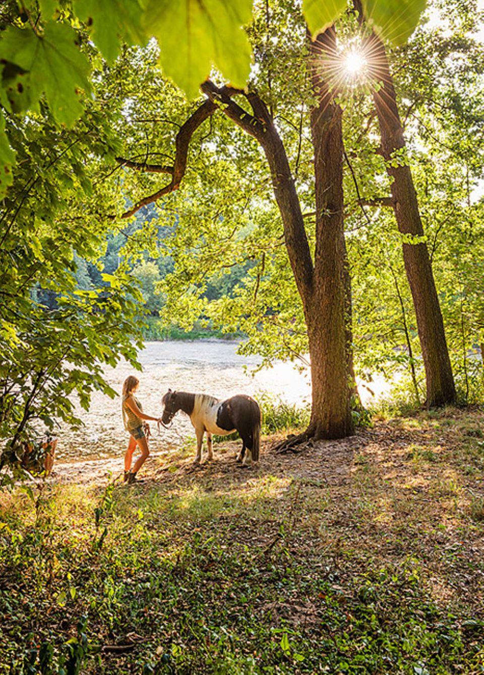 Reisetipps für Polen: Unter der Woche haben die Ponys in Barbarka ein wenig Freizeit. Der Wald gehört zum Naherholungsgebiet der Stadt