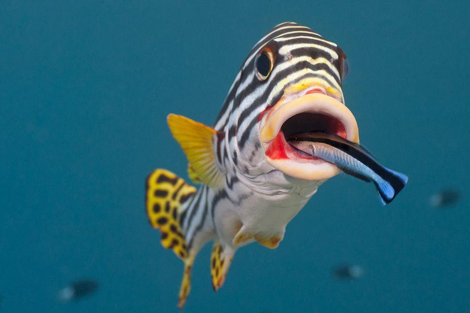Klug und empfindsam: Sechs Dinge, die Sie über Fische noch nicht wussten