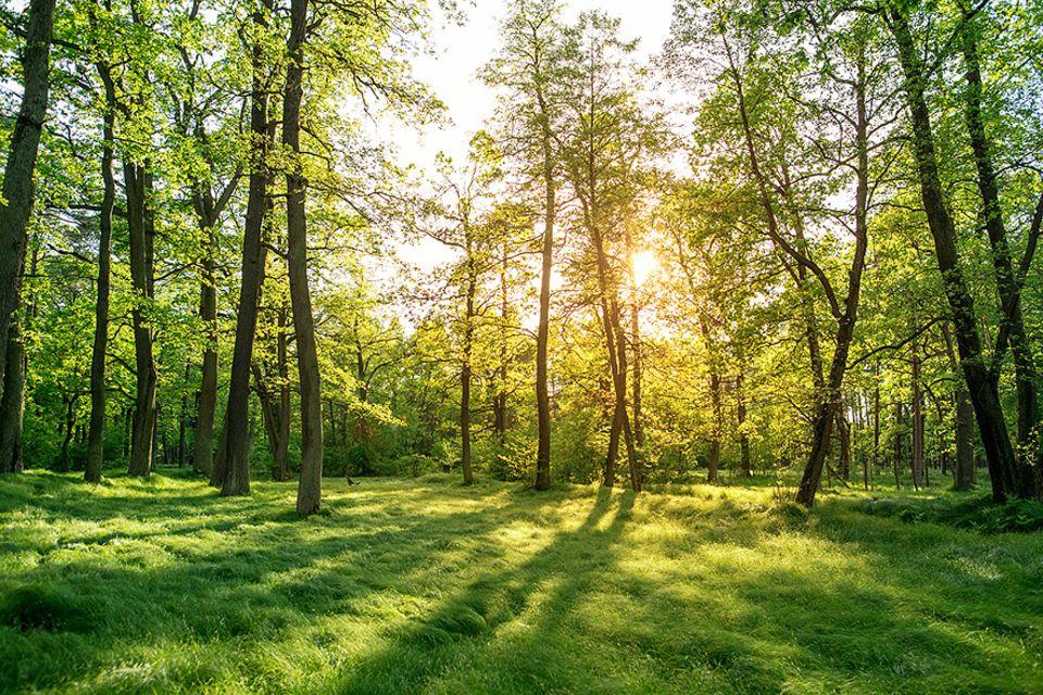 Ökologische Bestattungen: Mehr Naturnähe: Immer beliebter werden Urnen-Beisetzungen in Friedwäldern