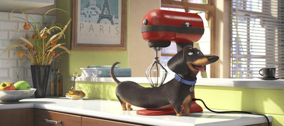 Filmtipp: PETS: Der sarkastische Dachshund Buddy lässt sich gern vom Küchenmixer massieren, wenn Herrchen und Frauchen nicht zu Hause sind...
