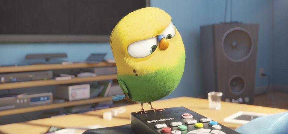 Filmtipp: PETS: Fernsehen kann auch eine gute Ablenkung sein, während man als Haustier auf seinen Besitzer wartet.. Wellensittich Sweetpea ist jedenfalls schon Fernseh-Fan!