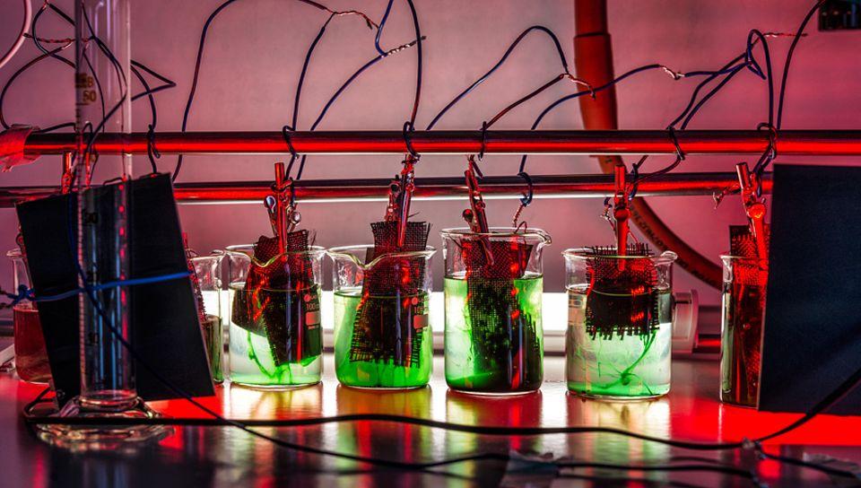 Energiegewinnung: Versuchsaufbau am UFZ: An den Gitterelektroden wachsen die grünlichen Cyanobakterien und erzeugen Wasserstoff