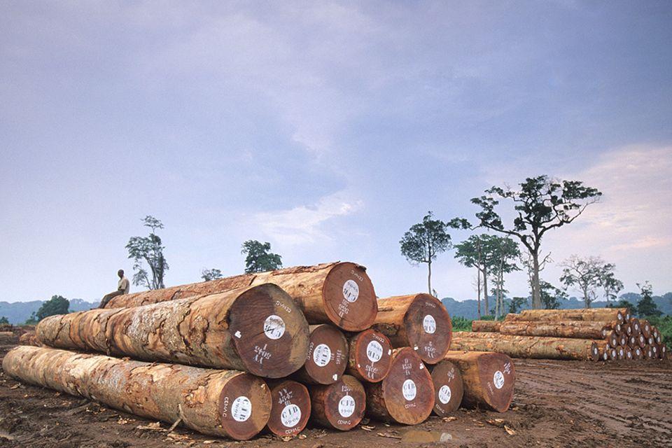 Afrika: Mehr als neun Millionen Hektar Regenwald wurden seit dem Jahr 2000 im Kongobecken abgeholzt - der Großteil illegal