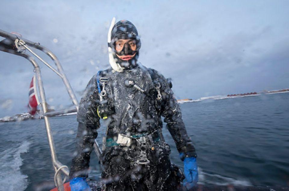 Wale vor Norwegen: Ein steifgefrorener Tauchanzug und vier Grad kaltes Wasser: Zum Job des Unterwasserfotografen gehört auch Überwindung