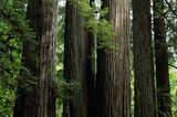 Redwood Nationalpark, Kalifornien
