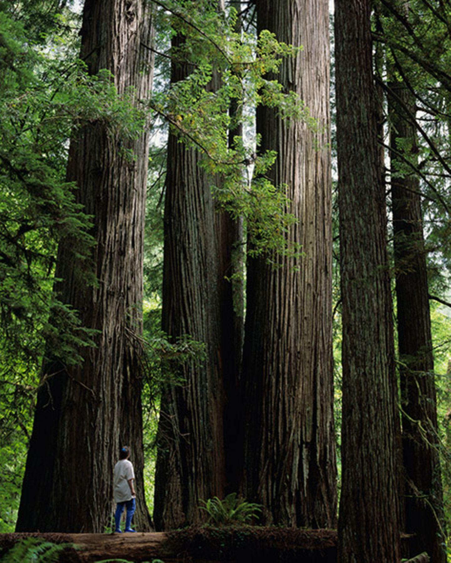 Redwood Nationalpark, Kalifornien