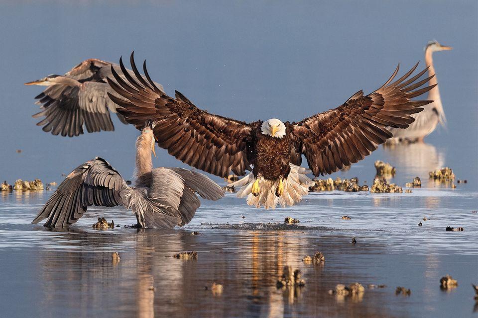 Audubon Photography Awards: Ausgezeichnete Vogelbilder