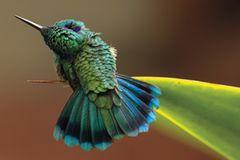 """Gewinnerin in der Kategorie """"Fine Art"""": ein Kolibri"""
