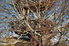 Lake Nest, USA