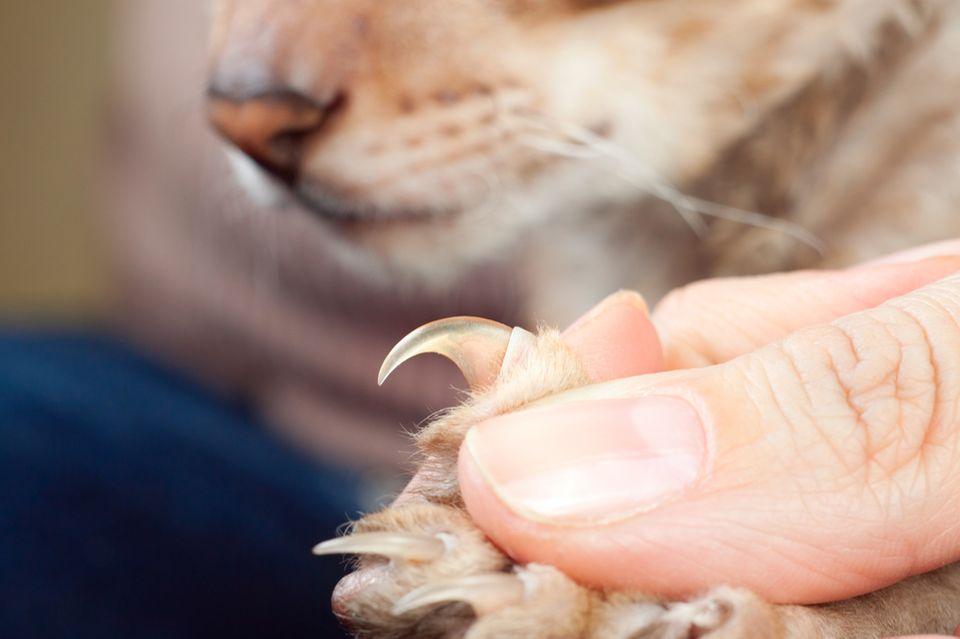 Beruf: Tierheilpraktiker