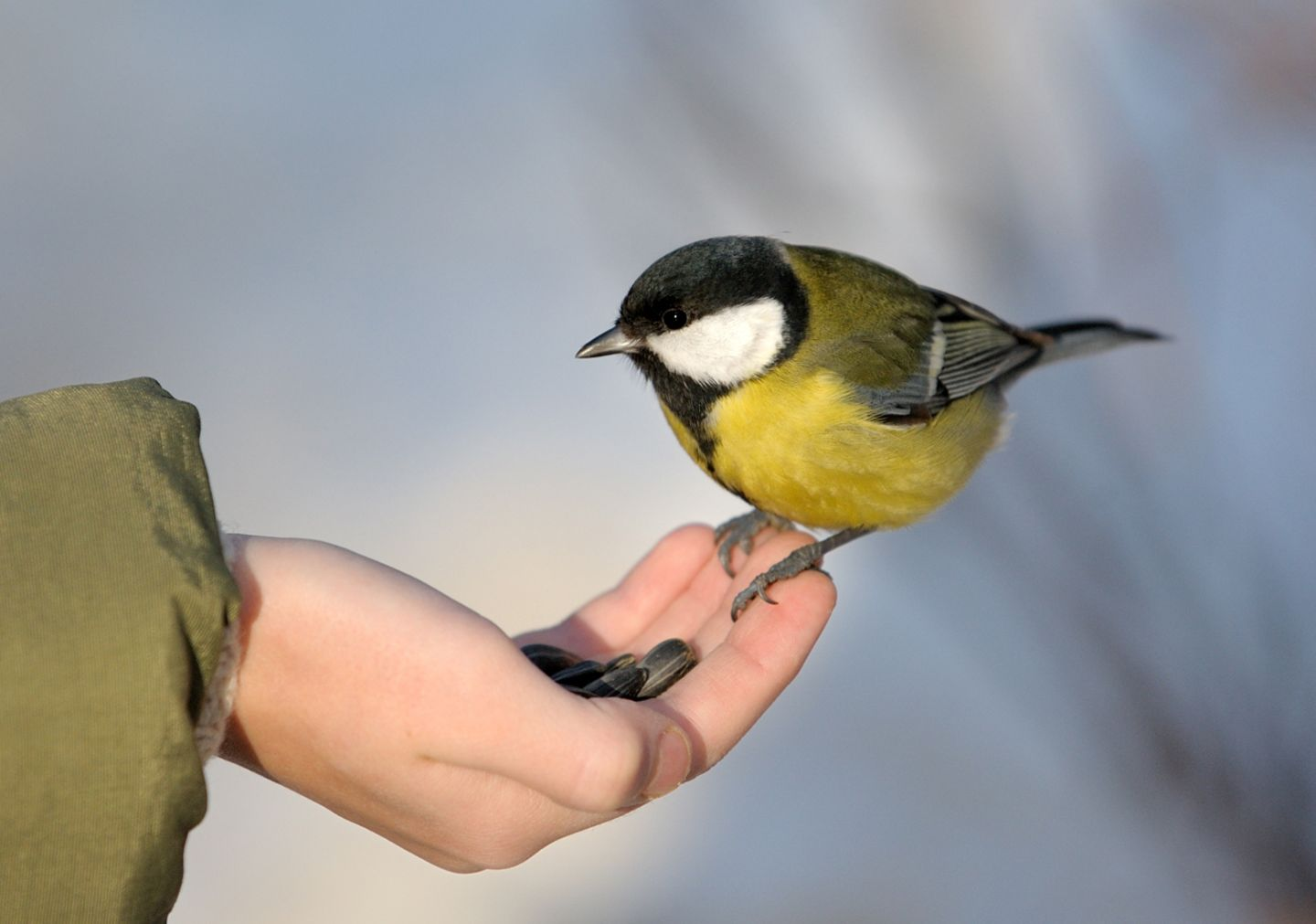 Englische Redewendung: A bird in the hand is worth two in the bush