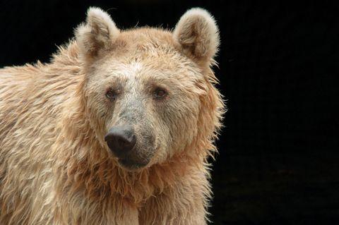 Redewendung: Da ist der Bär los