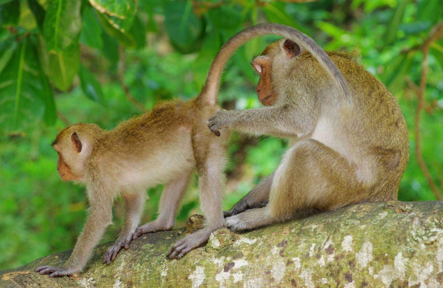 Englische Redewendung: I'll be a monkey's uncle