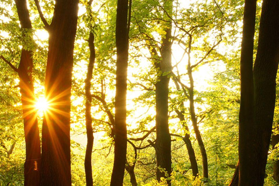 Gib mir fünf: Fünfmal staunen über den Wald